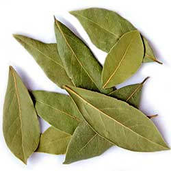 Hoja de Laurel